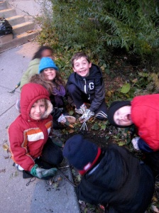 Planting bulbs at Bancroft