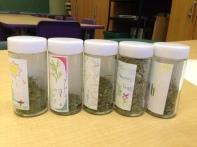 Spice Jars at Edward Murphy
